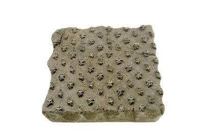 Antique Bunta Stamped Wood Printing Fabric Textile Batik Rajasthan India NP17A4