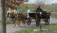 Working Hobby farm tours- Back-N-Time Horse Drawn Carriages