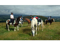Horse Trail Riding Guide