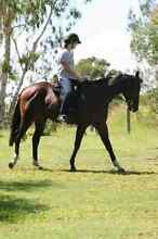 One of a Kind Gelding - Sale or Lease Moggill Brisbane North West Preview