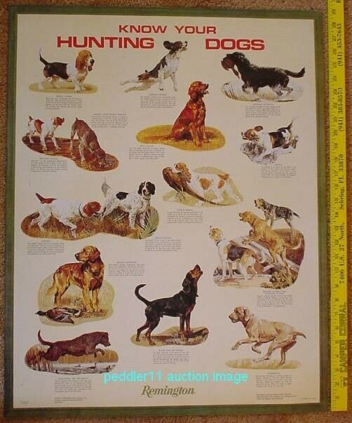 Remington Arms Know Your Hunting Dog Dogs 1995 23 x 29 Poster New Old Stock