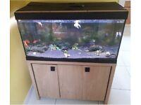 Roma 200 aquarium - £170