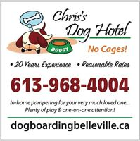 Chris's Dog Hotel No Cages, Five Stars Luxury Boarding
