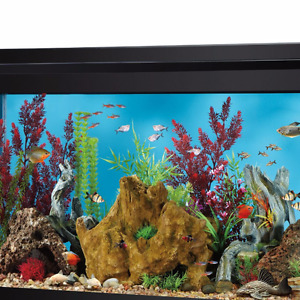 LARGE Fish Tank with all starter kit accessories
