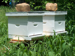 Host a Bee Hive!   Backyard, Rooftops