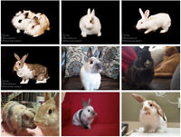 Looking For Some-Bunny to Love?