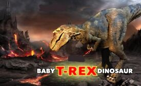 Realistic Animatronic Dinosaur FOR SALE (4 metres in length) Party & Event Attraction