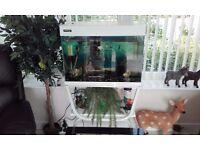 80 Ltr Fish Tank & Fish