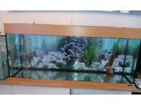 Juwel Rio 240 Fish Tank (121x41x55h) + Eheim Ecco pro 300