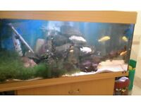 Jewel aquarium/fish tank. Complete set up with large external filter. 20(approx)cichlids.