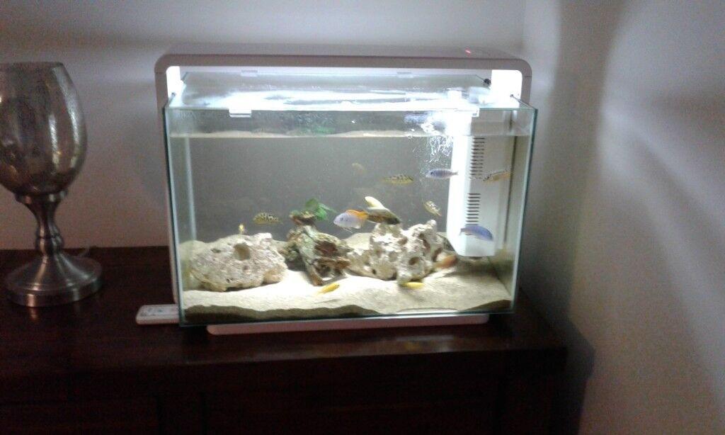 Superfish 60l Aquarium In Wolsingham County Durham Gumtree