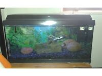 Jewel 54 litre Aquarium