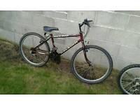 Mountain bike rsleigh nitro