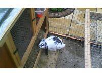 rabbits ad hutch
