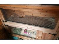 Rabbit hutch & rabbit for sale