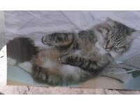 GREY TABBY MISSING - REWARD FOR SAFE RETURN
