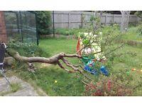 Free wood from fallen tree in our garden
