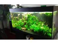 Jewel Rio 300 fish tank