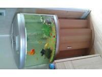 aqua one ufo 550. tank stand fish ornaments