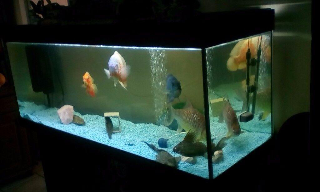 l k big fish tank 450 litre 39 s 5ft juwel rio 400 aquarium complete tropical or malawi setup. Black Bedroom Furniture Sets. Home Design Ideas