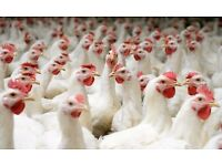 Free website in exchange for poultry farming