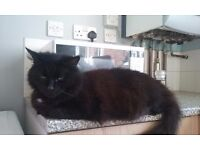 Need to rehome my cat Jack - Male Neutered.