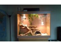 Bearded Dragon and vavarium ***reduced ***