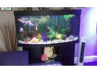 Big now fish tank