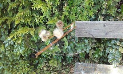 Net Live Maxi Bird Trap 45 cm Trappola Uccelli Piege Oiseaux Trampa Pajaros Wood
