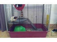PET RAT (MALE) + CAGE N ACCESSORIES