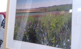 Signed by Norfolk Landscape Photographer Jon Gibbs, framed print of wild flowers nr Burnham Market
