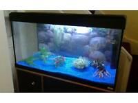 Fluval Roma 200 fish tank