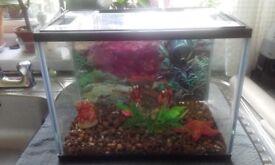 Kids starter fish tank (full coldwater set up)