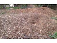 free pine tree mulch