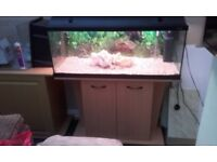 Fish tank & beech stand 164 litres