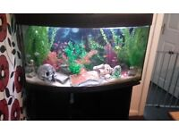 3ft dome shape fish tank with stand