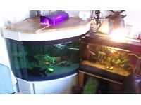 large home made corner fish tank stand