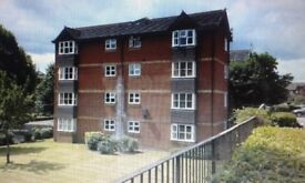 Lovely 1 bedroom flat for rent, furnished and very well kept
