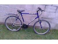 Raleigh mountain Bicycle adults