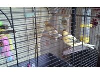 canaries + cage + stand