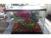 Kids starter fish tank