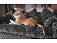 Cuddly tiger with free sofa !!!