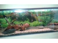 3 x Glass 4ft Clear Seal fish tanks with pumps etc