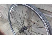700c BONTRANGER TREK rear bike wheel Shimano 7 8 9 10 speed