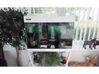Fish tank for sale including fish