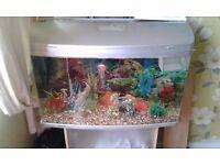 Ar850 fish tank and fish