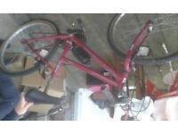 Ladies universal bike