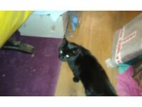 BLACK CAT MISSING IN MEXBOROUGH