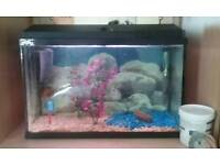 Fish tank includes everything!