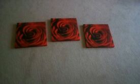 Rose pictures x 3